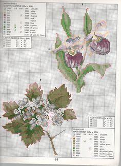 STATE FLOWERS  (bbj0075) Minnesota & Missouri) 1/1