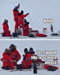Humor: puns, memes and funny pics ~ Penguins. They like to science. Humor Animal, Animal Memes, Animal Captions, Funny Animal Pictures, Funny Animals, Cute Animals, Animal Fun, Funny Group Pictures, Penguin Pictures