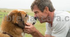 A Dog's Purpose Trailer Celebrates National Dog Day -- W. Bruce Cameron's best selling novel A Dog's Purpose comes to theaters this January, proving that every dog happens for a reason. -- movieweb.com/... #dogwalking #dogs #animals #outside #pets #petgifts #ilovemydog #loveanimals #petshop #dogsitter #beast #puppies #puppy #walkthedog #dogbirthday #pettoys #dogtoy #doglead #dogphotos #animalcare