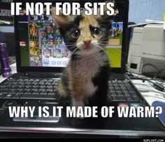 Too stinkin' adorable!