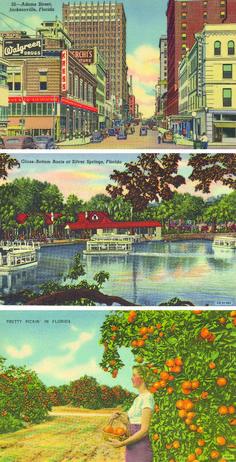 Florida Alligator Monon Route Jacksonville Chicago Vintage Poster Repo FREE S//H