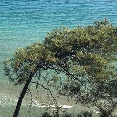 Φωτογραφία στο Instagram από @chparem • 5 Ιούνιος 2021 στις 9:45 π.μ. The Shining, Tree Of Life, Trees, Water, Outdoor, Instagram, Gripe Water, Outdoors, Tree Structure