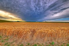kansas storm images | Kansas Wheat in Late Summer Storm | Flickr - Photo Sharing!