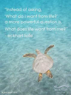 Instead of asking, 'what do I want from life?' a more powerful question is, 'what does life want from me?' Eckhart Tolle