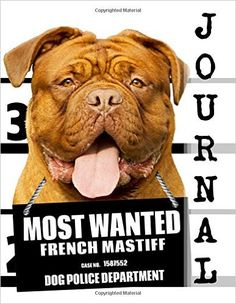 Most Wanted French Mastiff Journal: Diary Notebook (Dog Journal Notebook Diaries) (Volume Funny Dog Captions, Cute Funny Dogs, Funny Dog Memes, Funny Dog Pictures, Brindle English Mastiff, French Mastiff Puppies, Diary Notebook, Journal Diary, Journal Notebook