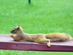 Sometimes I wish I could be a squirrel...
