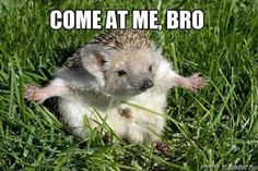 25 Adorable Hedgehog Memes that Will Make You Go Eeeeeee!