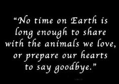 Our Love, Love You, We Missed You, Missing You So Much, Pet Loss, Think Of Me, Rest In Peace, Sayings, Loss Of Pet