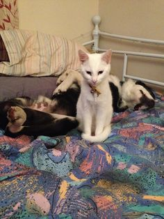 Fluke (at the back) taking part in #CrazyPetNaps  while Echo stands guard!