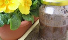 Jak si vyrobit hnojivo z kávy, slupek od banánu a vaječných skořápek Herb Garden, Gardening Tips, Mason Jars, Diy And Crafts, Flora, Planter Pots, Remedies, Herbs, Windows