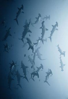 #fish #undersea #profollica #ocean #shark #tropical #deepsea