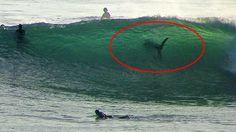 areal photos of sharks along coastlines   Unbelievable photo of shark spotted along San Diego's coastline - San ...