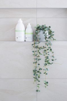 Natural Shampoo, Natural Hair Care, Natural Oils, Hydrate Hair, White Aesthetic, Plant Decor, Olive Fruit, Natural Cleaners