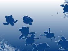 projeto tamar tartarugas marinhas - Pesquisa Google