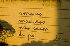 Amores Maduros não caem de pé