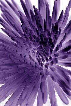 lavender and violet.