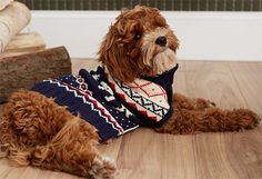 What a cute dog and sweater!