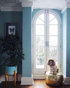 dix blue farrow and ball. Blue Painted Walls, Blue Walls, Dix Blue Farrow And Ball, Quirky Home Decor, Midcentury Modern, Colorful Interiors, French Doors, Discovery