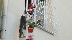This Woman Built A Cat Ladder For Strays So They Could Come In When It's Cold Outside