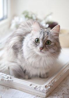 Beautiful Kitty! | Cute Things