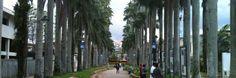 Joinville: Guia de Passeios e Atrações na Cidade