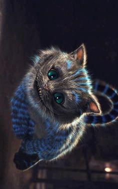 Chesire cat: The best Pet
