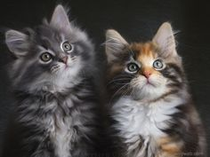 Cute cat Desktop Wallpaper Download 11