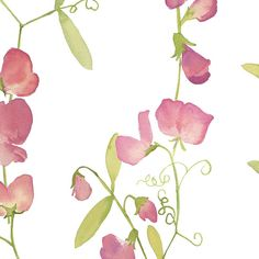 Pretty fabric – Sweet Peas - jillbyers – Spoonflower