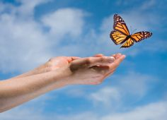 In the western world, the symbol of the butterfly stands for FREEDOM, FUN and JOYOUS TIMES. At the Bridges Center for Surgical Weight Management, we enjoy sharing in our patients' excitement with each pound they lose! www.BridgesAZ.com