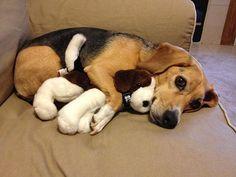 Ein Hund, der sein Spielzeug bewahrt