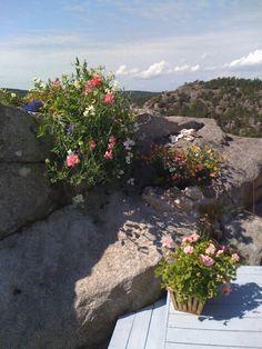 My rock garden by the seaside.