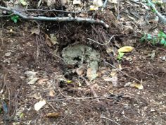 Winnie the Pooh or who's been digging out the bee's nest