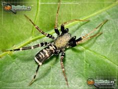 29 best new jersey insects images new jersey insects information rh pinterest com