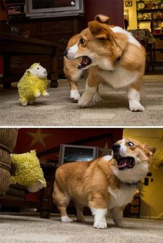 30 Funny Dogs Pictures | Funny Dog | DomPict.com #funnydogs