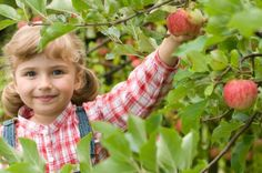 Let's Farming...! :)  http://longevityallthetime.tk/picking-free-green-in-nature/