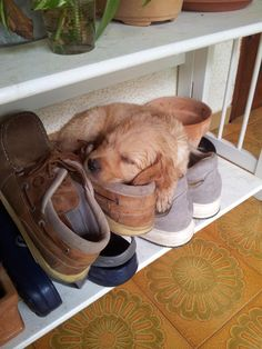 .The perfect place for a nap
