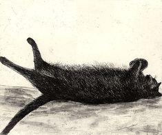 Amalia Sleeping, Etching, Elizabeth Blackadder - The Scottish Gallery, Edinburgh - Contemporary Art Since 1842 Black Cat Art, Black Cats, Blackadder, Digital Museum, Collaborative Art, Cat Boarding, Cat Drawing, Watercolor Drawing, Crazy Cats