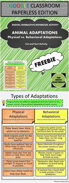 Google Classroom Adaptations Interactive Notebook - Teaching Animal Adaptations this school year? Looking for a way to get your students engaged in Interactive Notebooking Activities without the time it takes to cut and glue? Want to integrate technolog