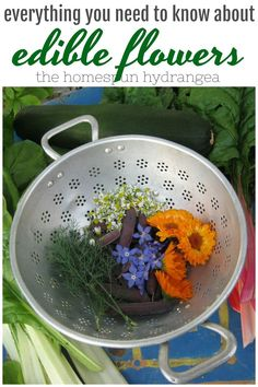 Garden ideas Edible Flowers and How to Grow Them - The Homespun Hydrangea How Do I Get My Child to B