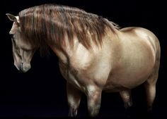 As Ravishing as a Pearl. Gosh I want a horse with a pearl gene!
