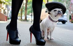 Modern Victorian Lace up Platform Heels...and a cute french puppy. I want a little boy French bulldog and name him Pierre.