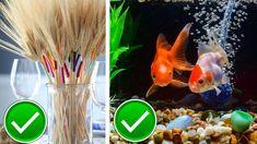 VIZIONEAZĂ VIDEO-ul PENTRU A AFLA care sunt cele 5 obiecte care atrag prosperitatea: Fish, Pets, Animals, Youtube, Animaux, Animales, Animal, Youtubers, Dieren