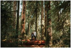 HOH Rainforest Engagement Pictures in Washington State — Courtney Sinclair Photography Engagement Photo Inspiration, Engagement Pictures, Engagement Session, Crescent Lake, Seattle Wedding, Washington State, Pacific Northwest, Scale, California
