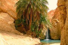 oasis-tozeur-tunez.jpg (600×400)
