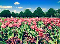The beautiful gardens of Hampton Court Palace