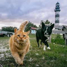 Locals on a Lighthouse on #Osmussaar island - really cute guys by the way. One just can't leave without caressing a cat (or dog or both of them)    #Estonia #dkwelcometoestonia #visitestonia #bestofthebaltics
