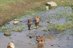 3 cani in acqua corsa