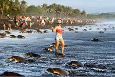 Cientos de turistas impiden a tortugas marinas desovar en una reserva natural de Costa Rica
