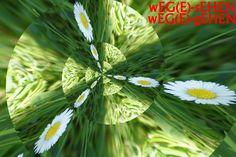 Margerite Plants, Plant, Planets
