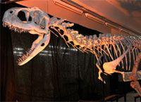 Dinossauros em São Carlos   FarolCom